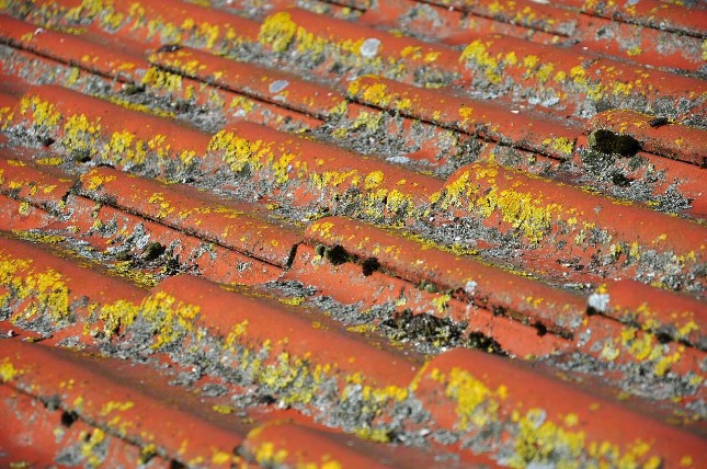 Roof Care Rot