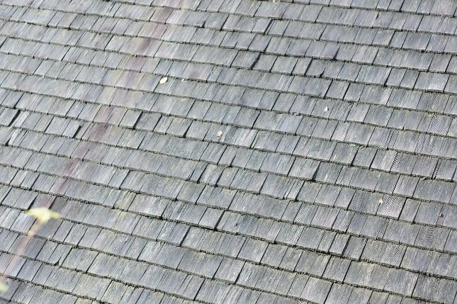 Hail Damage Shingle
